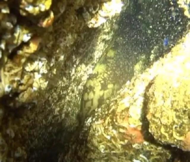 Marmarada yıllar sonra ilk kez orfoz balığı görüldü... Türkiyede önemli bir milat
