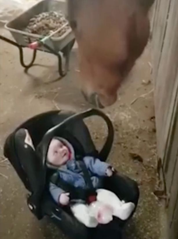 Horse rocks baby in car seat