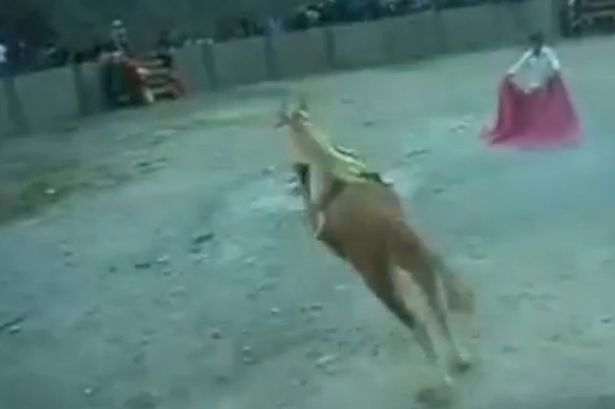 Dog tied to a bull in Peru