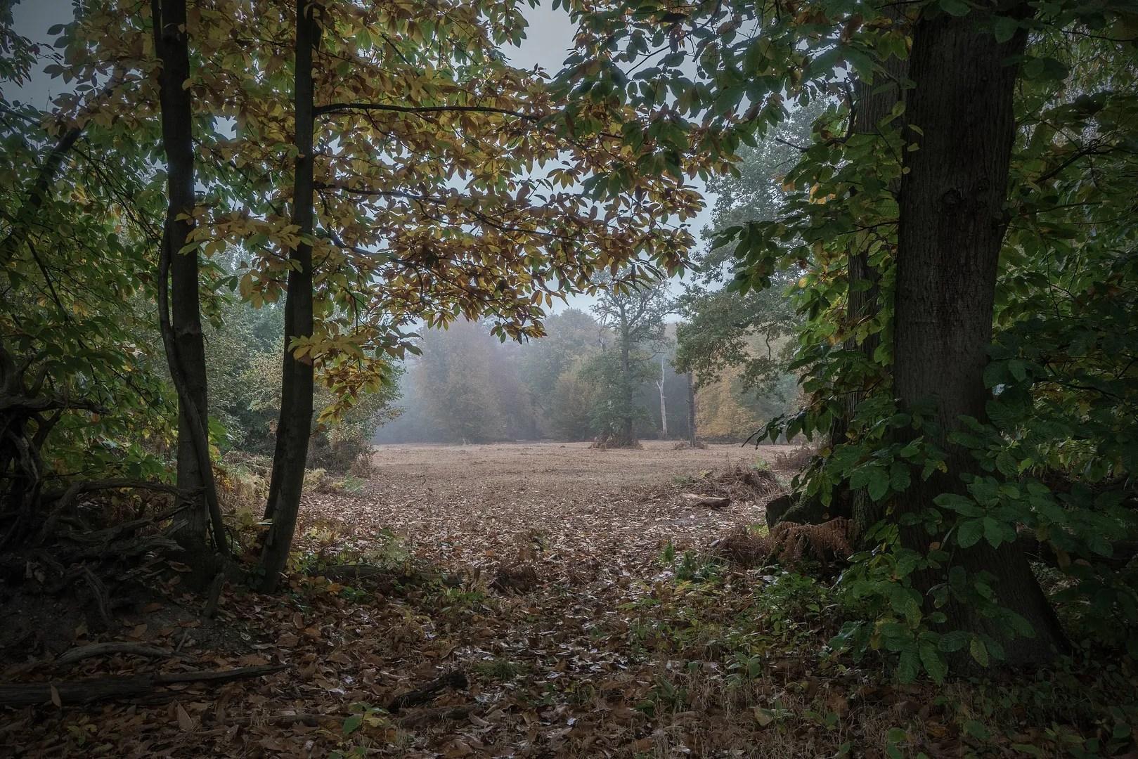 treesandclearing