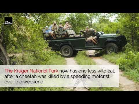 Man arrested after hitting an endangered cheetah at Kruger National Park