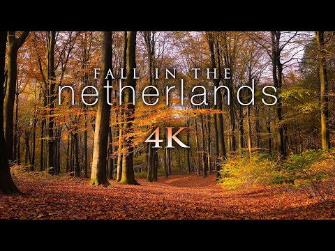 FALL IN THE NETHERLANDS [4K] + Soothing Piano Music & Bird Sounds - 1HR Ambient Nature Relaxation