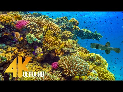 Amazing Underwater World of the Red Sea - 4K Relaxation Video with Calming Music - 3 HOUR