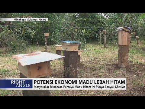 Potensi Ekonomi Madu Lebah Hitam - Right Angle