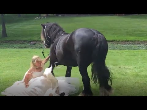 VERY BAD ANIMALS - Funny unexpected moments