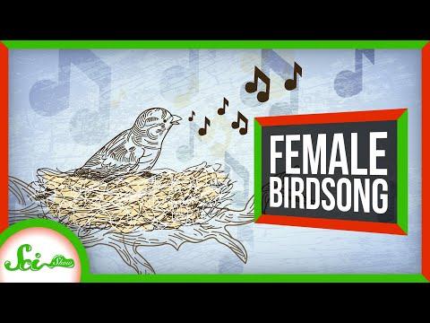 We've Been Ignoring Female Birdsong for Centuries