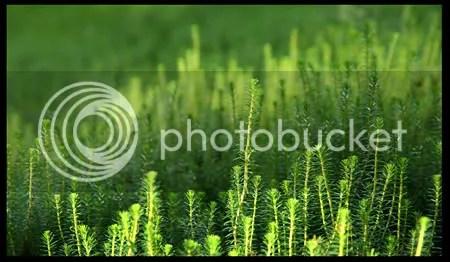 tara trava