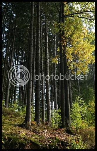 drvece 1