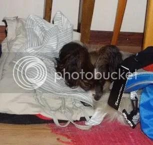 Ninjo har somnat på mina smutskläder - så oemotståndligt...