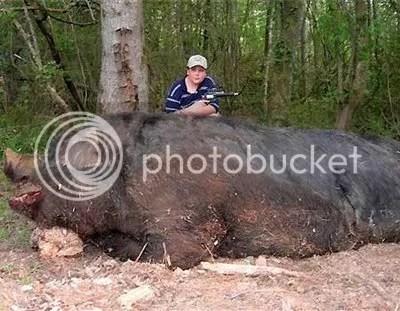 binatang raksasa, gurita pembunuh manusia