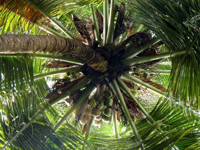 5 Organic Coconut Products to Use for a Healthier Lifestyle