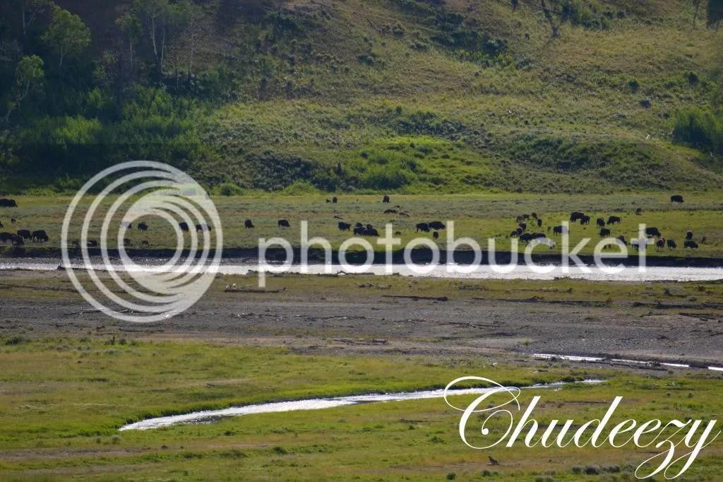photo Picture772-1_zps3f7a8ecc.jpg