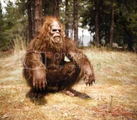 Sasquatch Pictures, Images and Photos