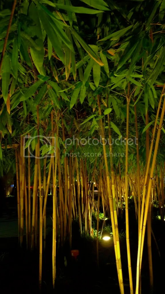 bamboos at night