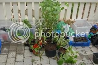 Planter fra Raell