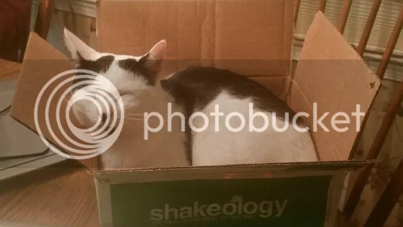 photo moo in a box_zpsl3gme57x.png