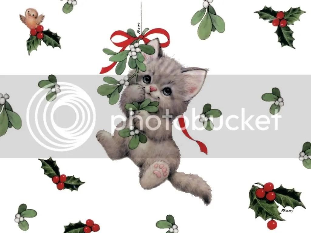 https://i2.wp.com/i450.photobucket.com/albums/qq228/MorningGloryGirl67/christmas-cat.jpg