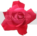 red-rose-transparent-isolated-1.png picture by janeway