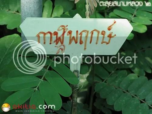 สนามหลวง 2, ตลาดต้นไม้, ต้นไม้, ดอกไม้, ตลาดนัดธนบุรี