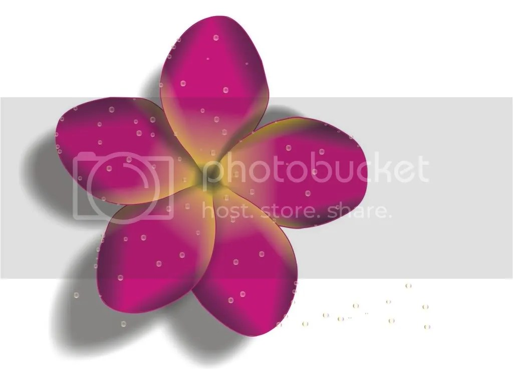 Frangipani Illustration Pictures, Images and Photos