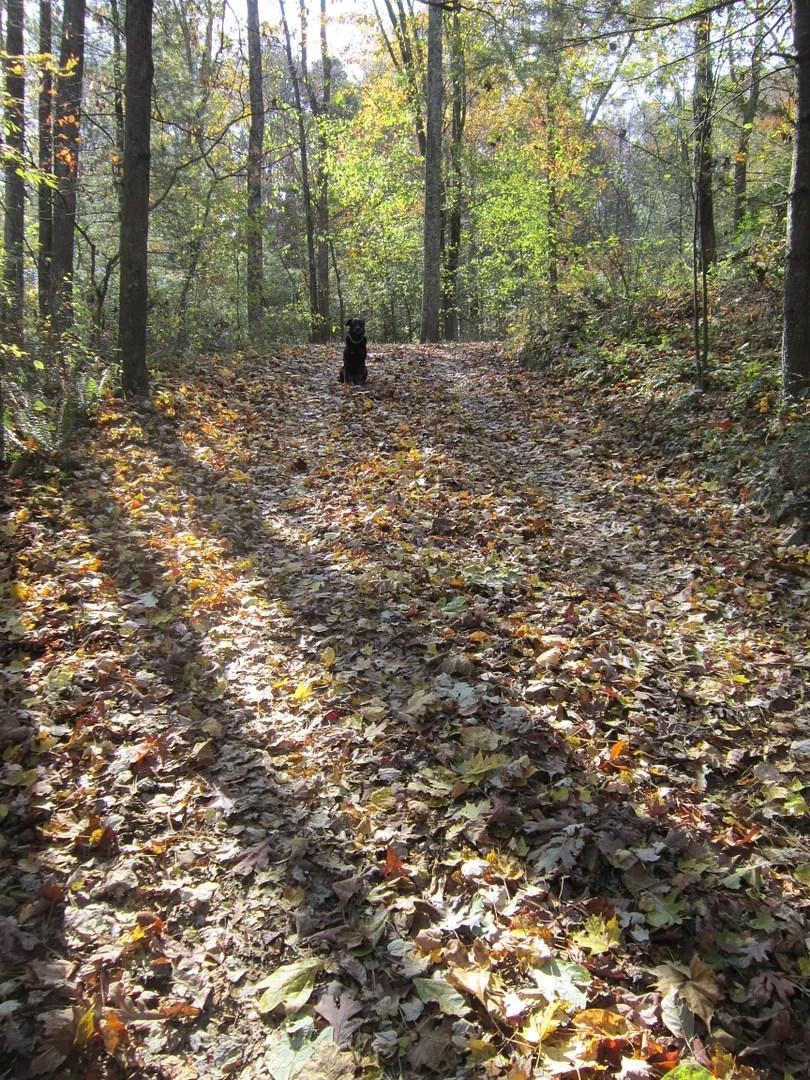 autumn dog on autumn hill