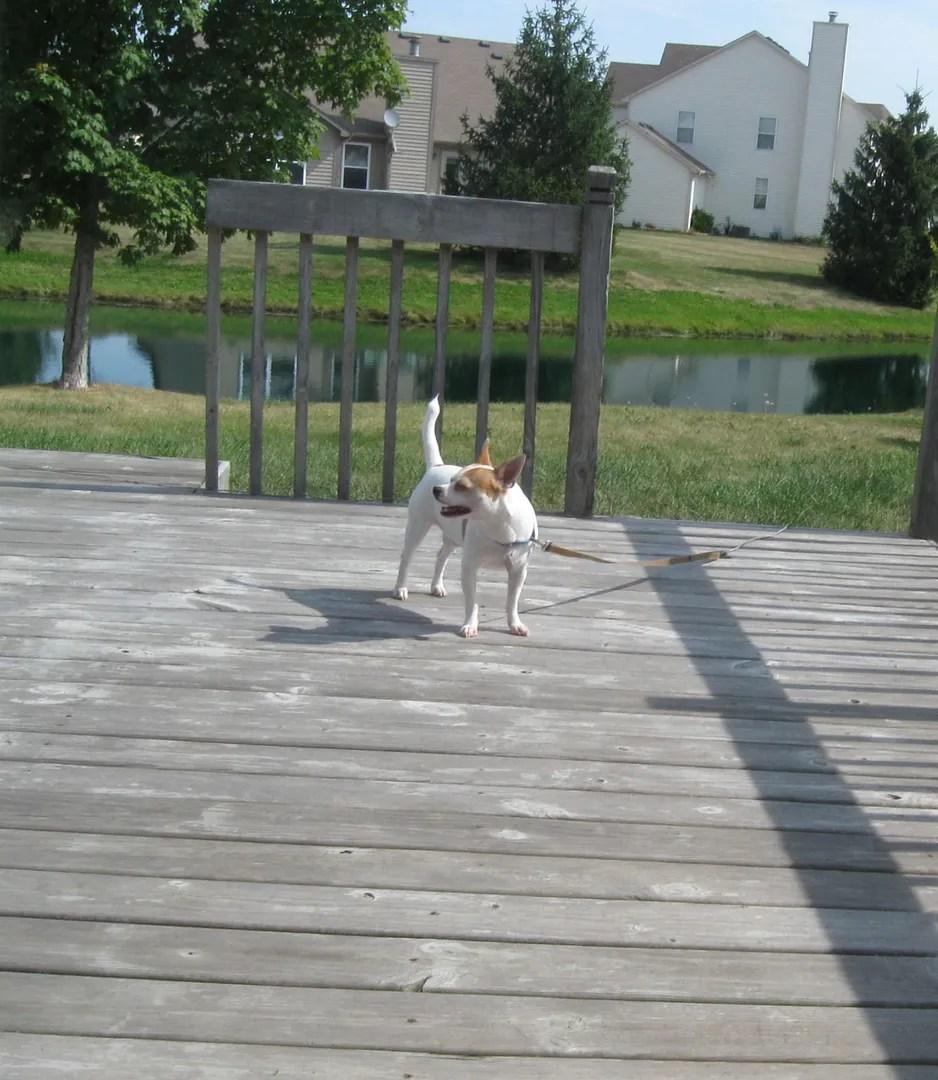 backyard deck, Lucky