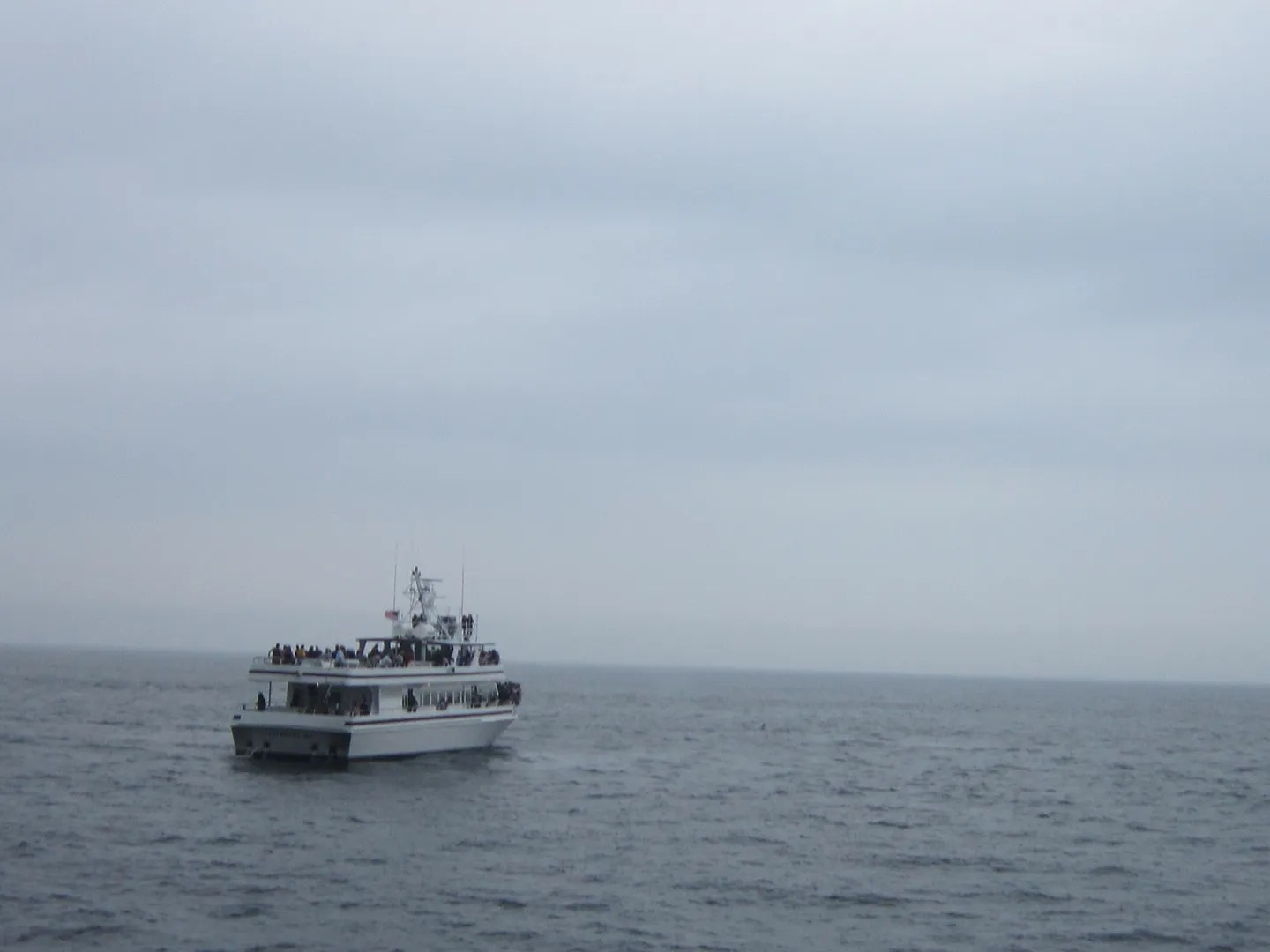 whale watching cruise, Cape Cod