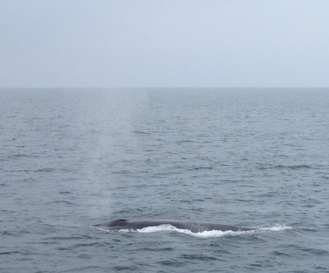 whale blowhole spray, Cape Cod