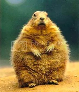 groundhog Pictures, Images and Photos
