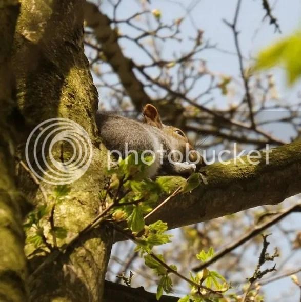 photo squirrel_zpsookuantg.jpg