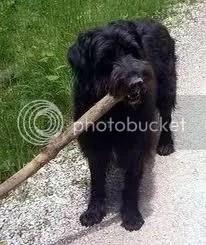 hund mit Knüppel