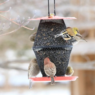 NO NO Sunflower Seed Red Lantern Wild Bird Feeder   Walmart com NO NO Sunflower Seed Red Lantern Wild Bird Feeder
