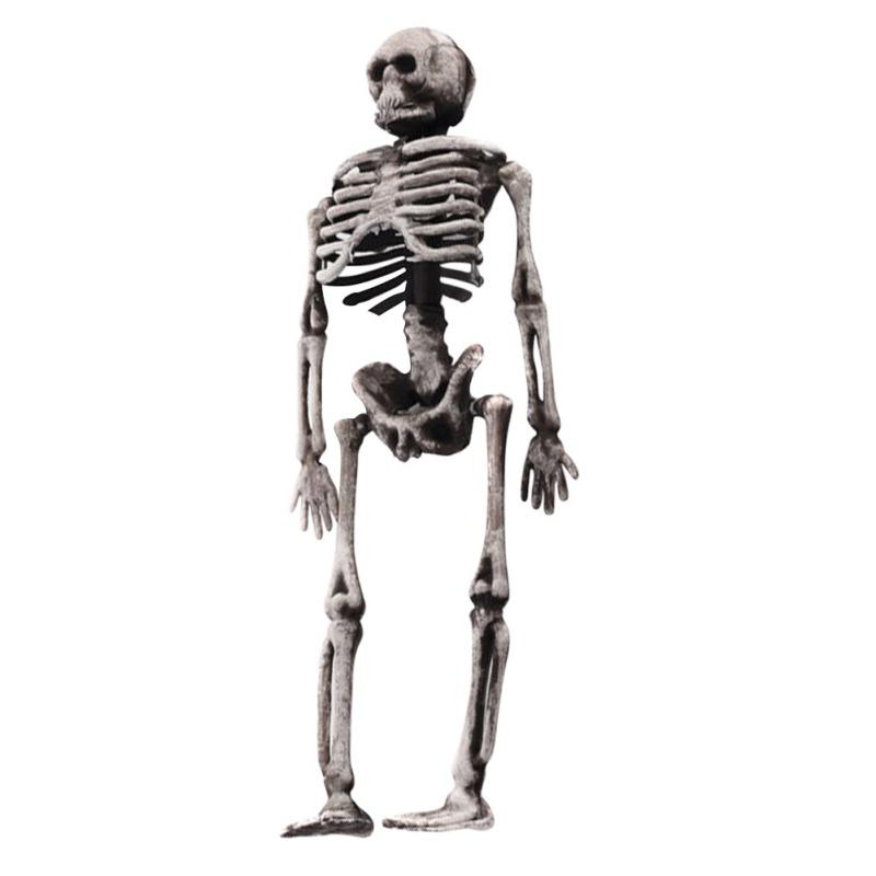 Skeleton Human Model Skull Full Body Mini Toy Phone Human ...