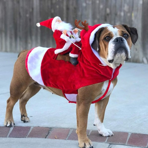 Dog Costumes Pet Costume Pet Halloween Christmas Suit Cowboy Rider Style  Santa Claus Christmas Pet Dogs Outfits for Festival Pet Dress Up | Walmart  Canada