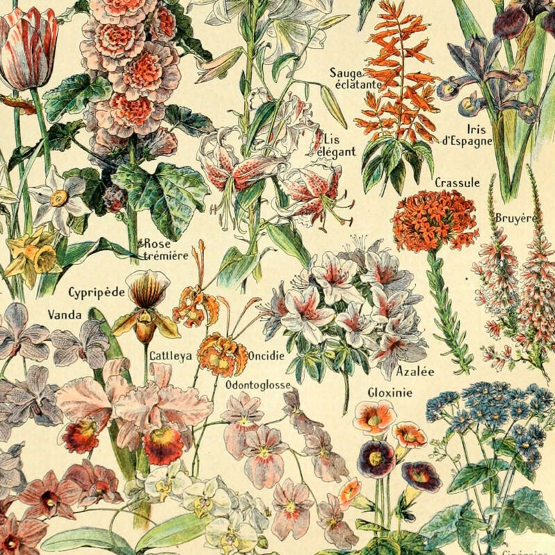 vintage poster print floral garden flowers botanical collection wall decorations