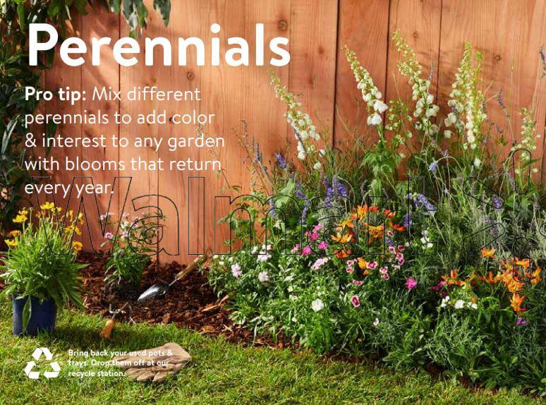 expert gardener outdoor live plant lavender patio tree 2 3qt
