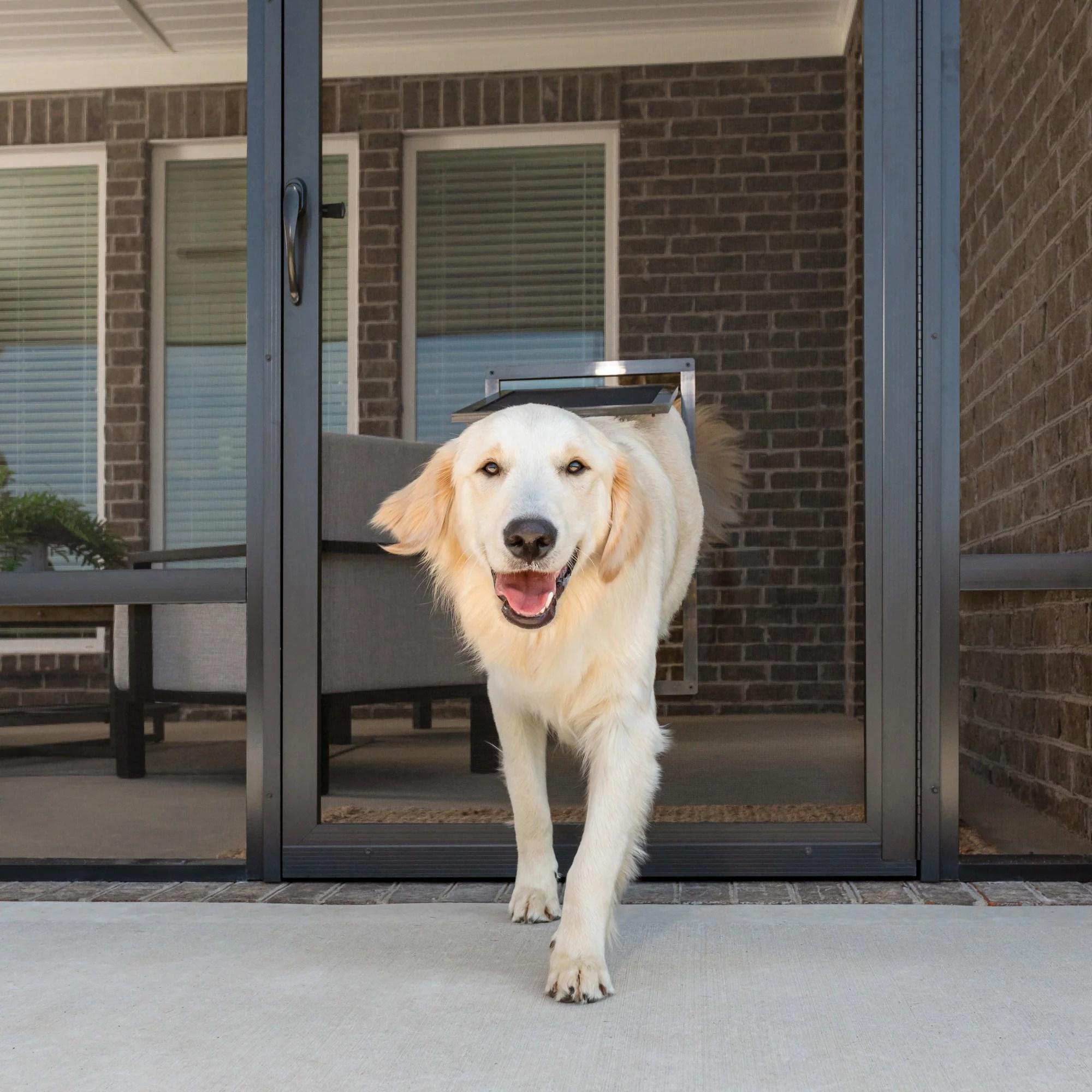 petsafe pet screen door dog and cat flap for screen door window storm door and porch use large walmart com