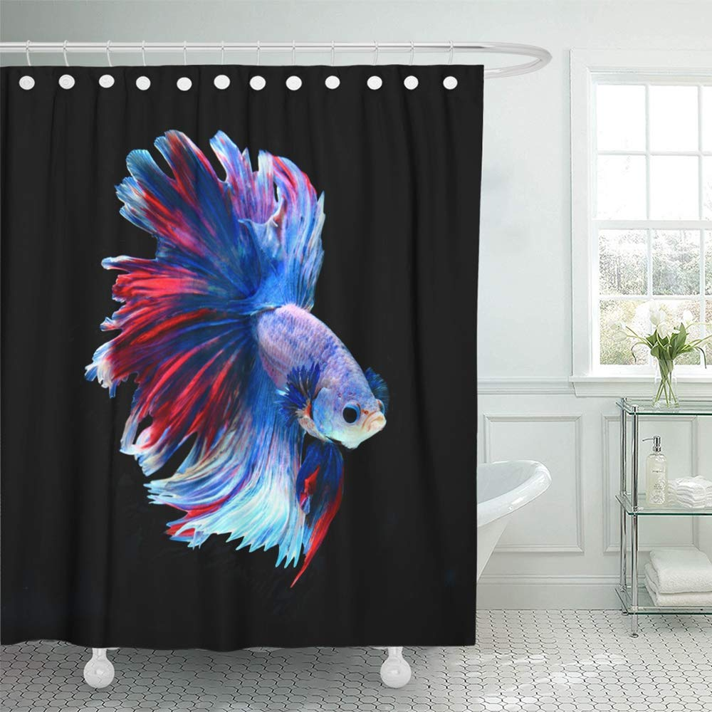 ksadk colorful aggressive red and blue siamese fighting fish betta black action animal shower curtain 66x72 inch