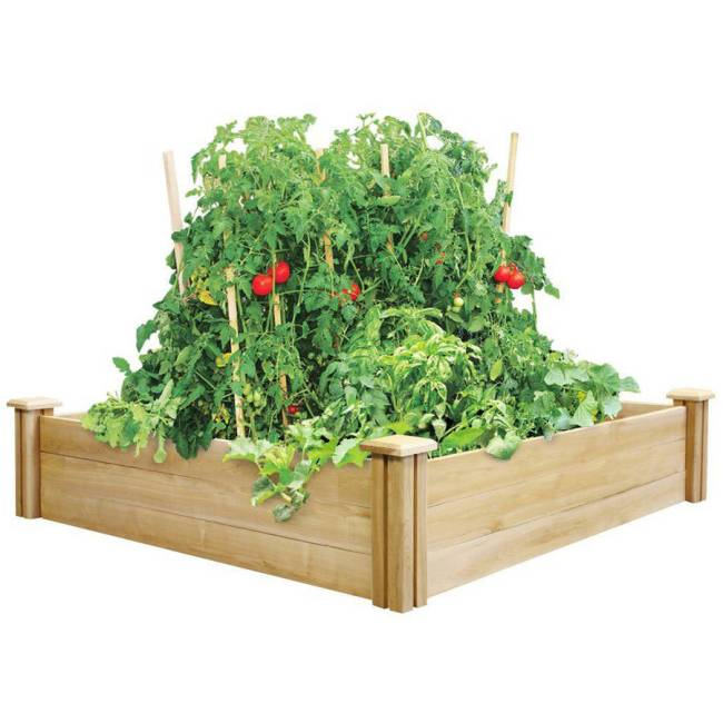 "Greenes Fence 4' x 4' x 10.5"" Cedar Raised Garden Bed"