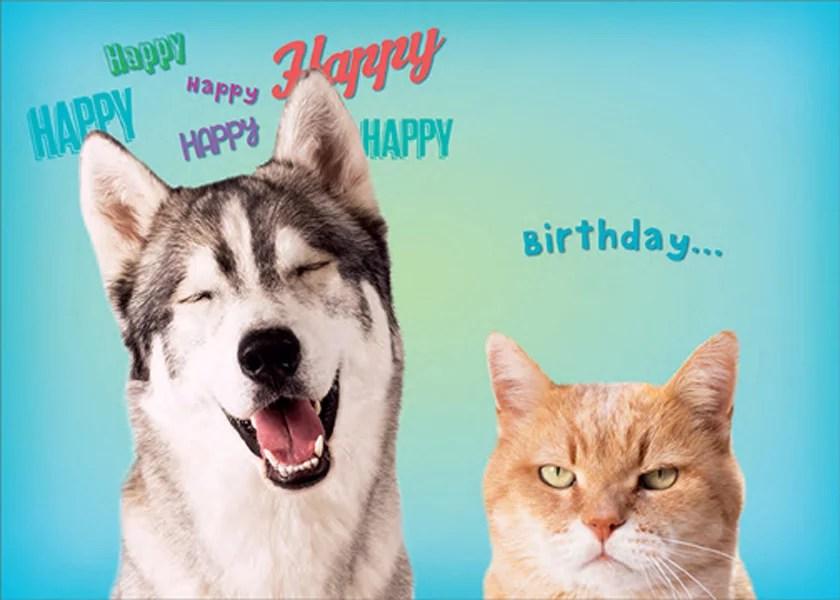 Rsvp Happy Huskie And Grumpy Cat Funny Humorous Dog And Cat Birthday Card Walmart Com Walmart Com
