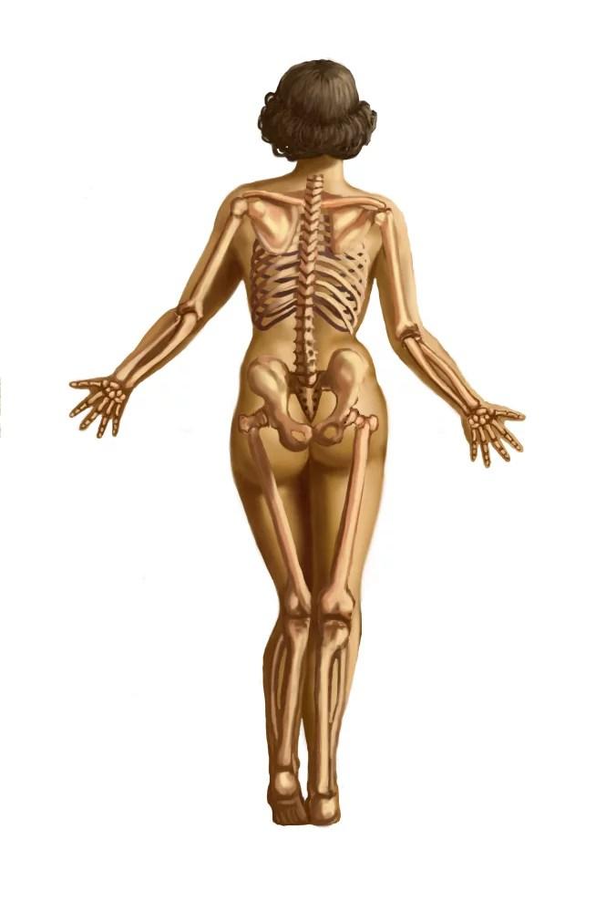 human skeletal system poster print by spencer suttonscience source