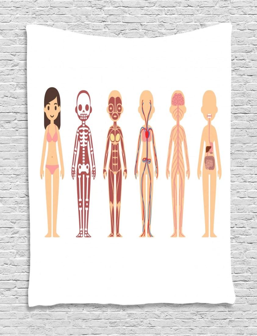 Biology Tapestry, Female Body Anatomy Chart Skeletal ...