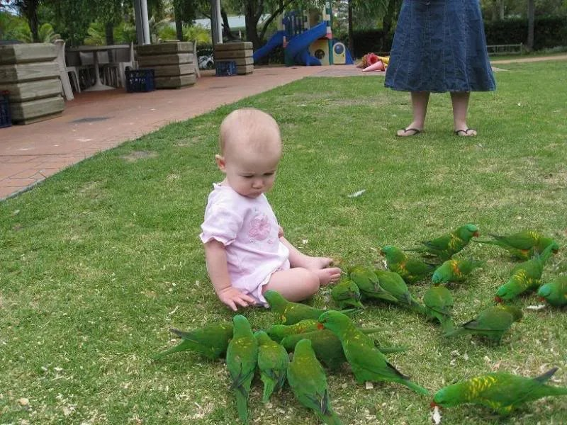 miss feeding the birds