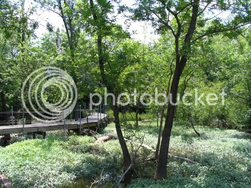 More Boardwalk Through the Wetlands