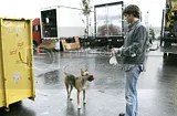 Jared Padalecki and his 2 dogs (6/6)