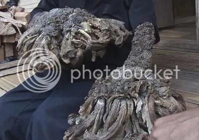 rootman2 Conheça o bizarro homem árvore