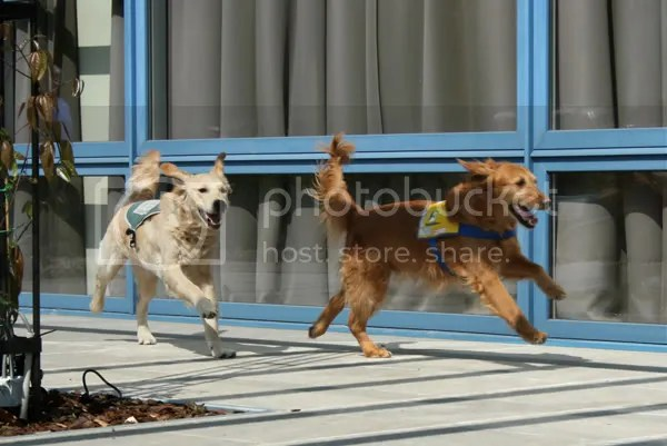 Darco en Quibus rennen