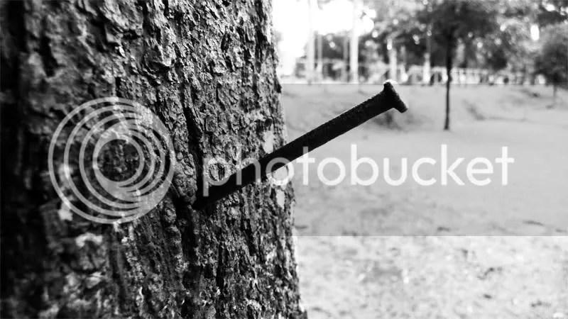 paku pohon