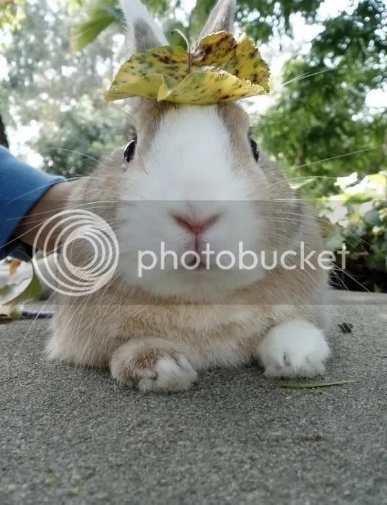 ארנבים זה שמחה