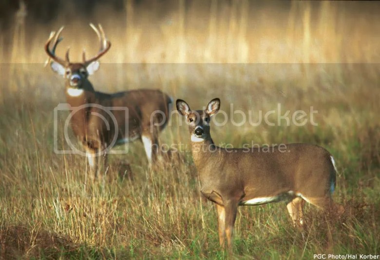 big deer graphics and comments